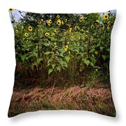 Fence Line Sunflowers Throw Pillow