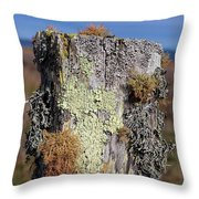 Fence Post Encrusted With Lichen  Throw Pillow