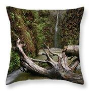 Fern Canyon Creek Throw Pillow