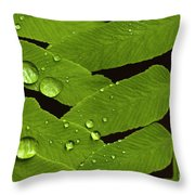 Fern Close-up With Water Droplets  Throw Pillow