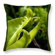 Fern Leaves Throw Pillow