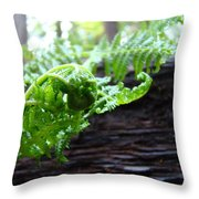 Fern On Redwood Tree Art Print Baslee Troutman Throw Pillow