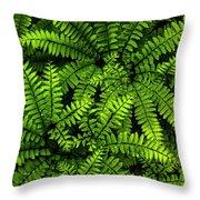 Ferns After The Rain Throw Pillow