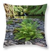 Ferns Along Banks Of Eagle Creek Throw Pillow