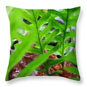 Ferns Art Prints Forest Ferns Giclee Art Prints Basle Troutman Throw Pillow