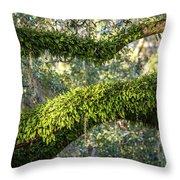Ferns On Live Oak Throw Pillow