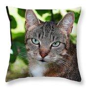 Ferocious Cat Throw Pillow