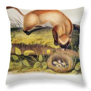 Ferret Throw Pillow by John James Audubon
