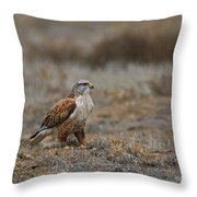 Ferruginous Hawk In Field Throw Pillow