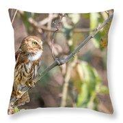 Ferruginous Pygmy-owl Throw Pillow