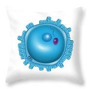 Fertilization, Pronuclei Formation Throw Pillow