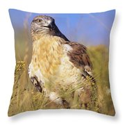 Feruginous Hawk Throw Pillow