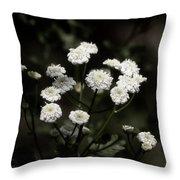 Feverfew - Tanacetum Parthenium Throw Pillow