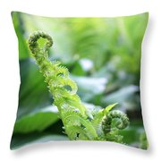 Fiddleback Fern Plant Unfurling In Springtime Throw Pillow