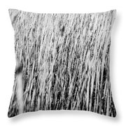 Field Grasses Throw Pillow