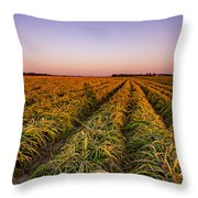 Field Lines Throw Pillow