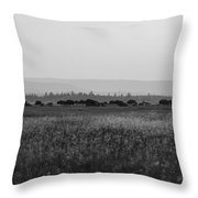 Field Of American Bison Bw Throw Pillow