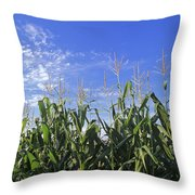 Field Of Corn Against A Clear Blue Sky Throw Pillow