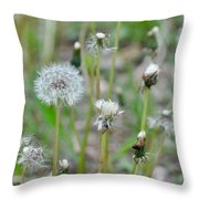 Dandelions In Seed Throw Pillow