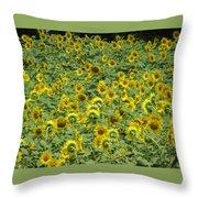 Field Of Sun Throw Pillow
