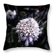 Field Scabious. A Member Of The Throw Pillow by Mr Photojimsf
