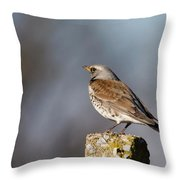 Fieldfare Watching  Throw Pillow by Cliff Norton