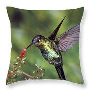Fiery-throated Hummingbird Panterpe Throw Pillow