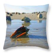 Fighting Conchs On The Sandbar Throw Pillow by Robb Stan
