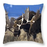 Fighting Moose Throw Pillow