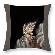 File Fish Throw Pillow