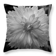 Filter Series 100 Throw Pillow by Jeni Gray