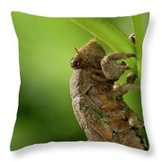 Final Instar Of A Cicada Emerging From The Ground To Molt On A L Throw Pillow