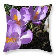 Finally Spring Throw Pillow