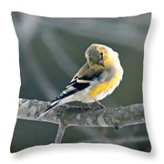 Finch Courtsy Throw Pillow