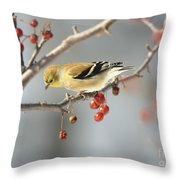 Finch Eyeing Seeds Throw Pillow