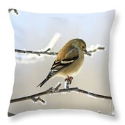 Finch On Frosty Perch Throw Pillow