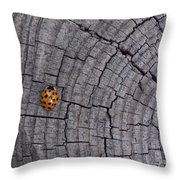 Find A Warm Spot Throw Pillow by Guy Ricketts