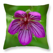 Finding Truth In Nature Throw Pillow