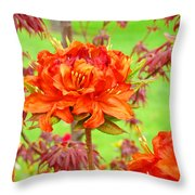 Fine Art Floral Art Prints Canvas Orange Rhodies Baslee Troutman Throw Pillow