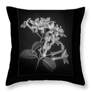 Fine Art Framed Study Of Estephanotis- Throw Pillow