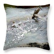 Fine Feathered Fisherman Throw Pillow