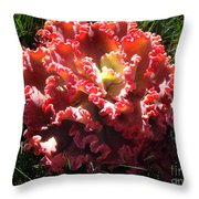 Fire Color Succulent. Curly Plant, Exotic Throw Pillow