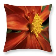Fire Dahlia Throw Pillow