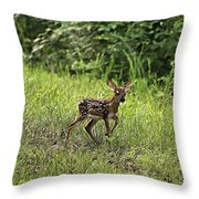 First Baby Fawn Of The Year Throw Pillow
