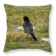 First Robin Of Spring Throw Pillow