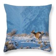 First Rut Mule Deer Buck Throw Pillow