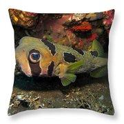 Fish Ball Throw Pillow