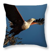 Fish Eagle Taking Flight Throw Pillow
