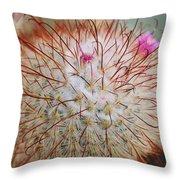 Fish Hook Barrel Cactus Throw Pillow
