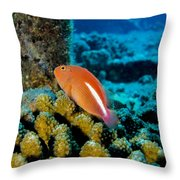 Fish On Coral Throw Pillow